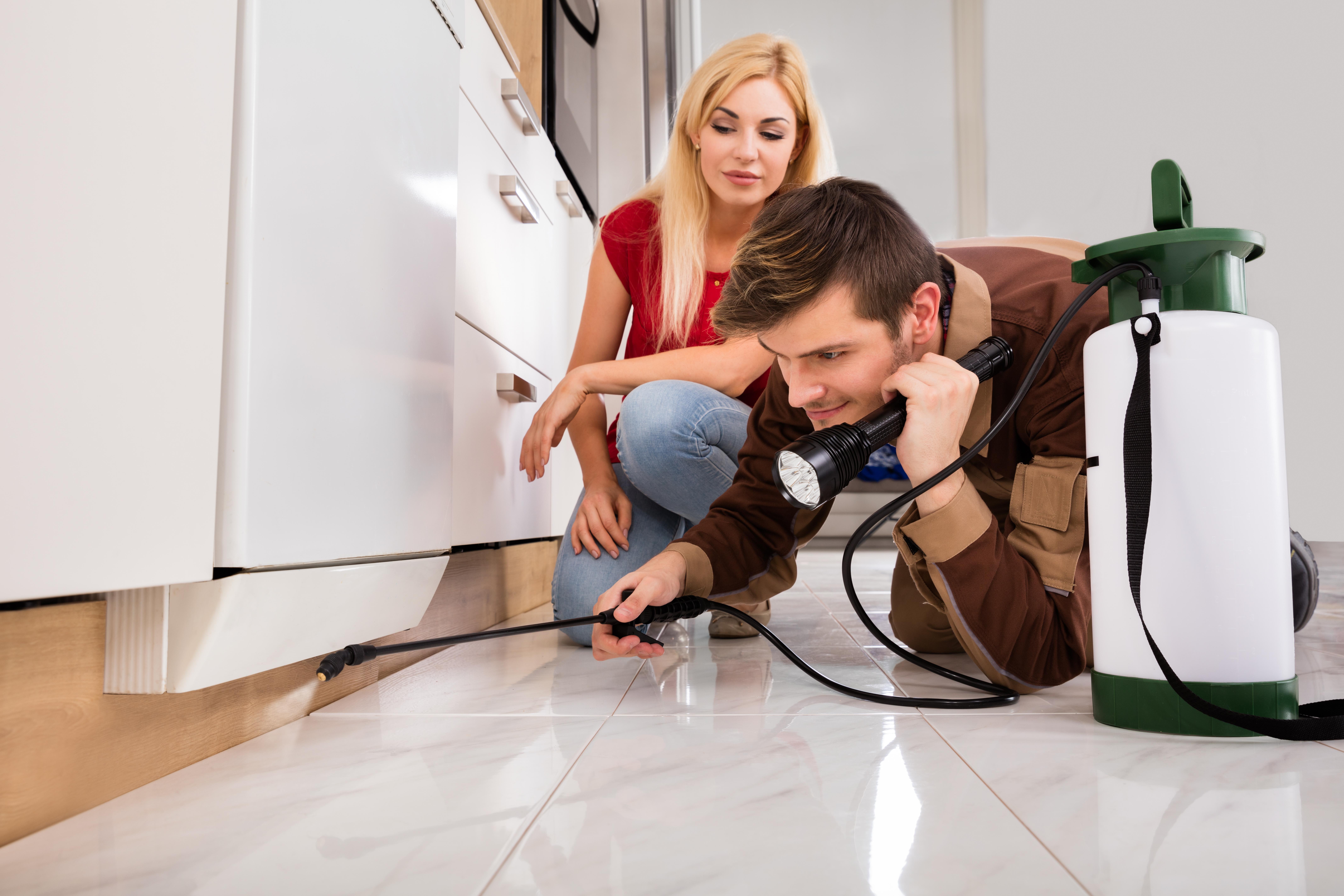 עוברים דירה? למה חשוב לבצע נקיון ורק לאחר מכן הדברה?